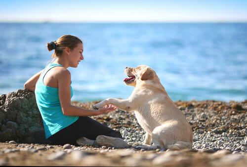 Cão e mulher em praia