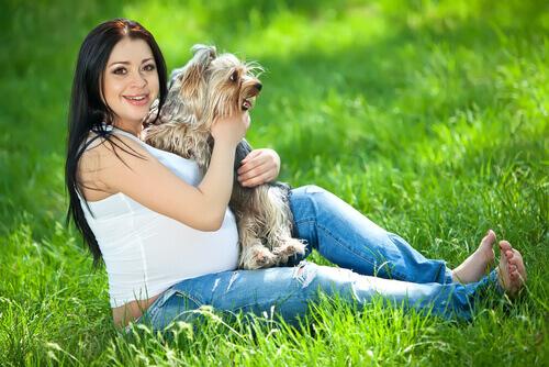 Cães detectam a gravidez