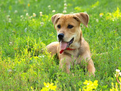 emoções-dos-cães