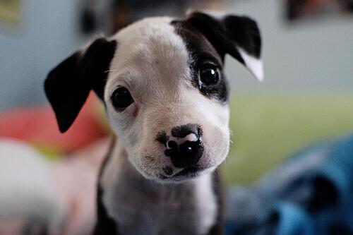 Filhote de cachorro
