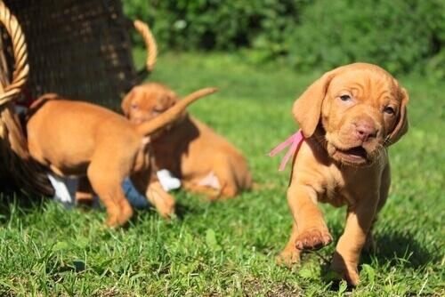 Um cão nasce bom?