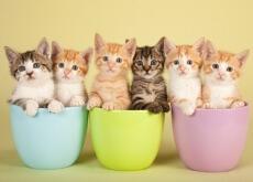 As cores dos gatos