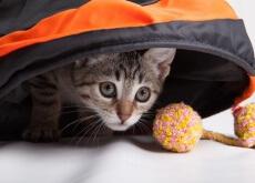 Jogos para os gatos