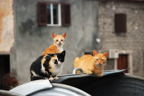 Um sírio alimenta a 150 gatos vítimas do conflito