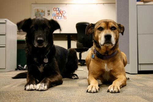 Humanizar os animais: cães muito civilizados