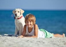 Cães ajudam crianças com autismo