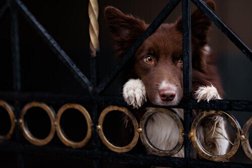 Como evitar o roubo de cães