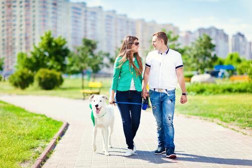 A saúde cardiovascular e os benefícios de se ter um cão