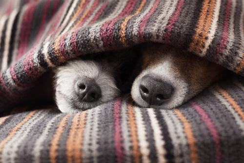 Cães dormindo