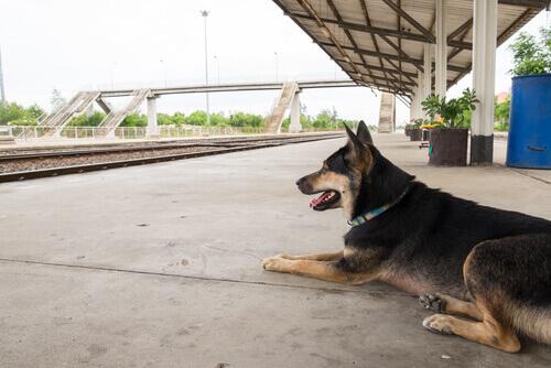 Cão abandonado