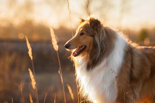 Normas para adotar um cão adulto