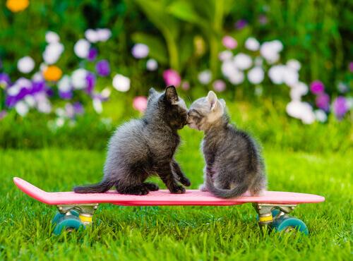 A amizade entre os animais