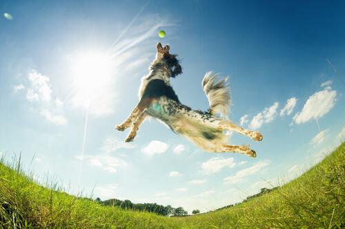 Cachorro pulando no sol