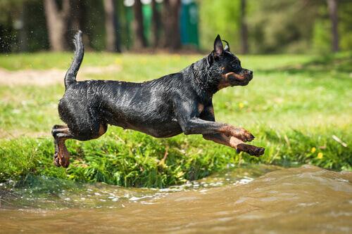 As melhores raças de cães de guarda