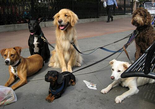 Cães DE COLEIRA