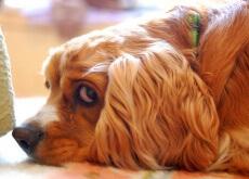 cão-assustado