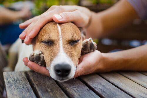 Cão entre as mãos de humano