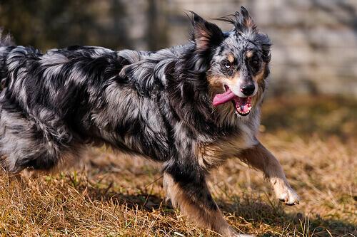 Cães gostam de perseguir