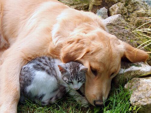 Cão e gato abraçados