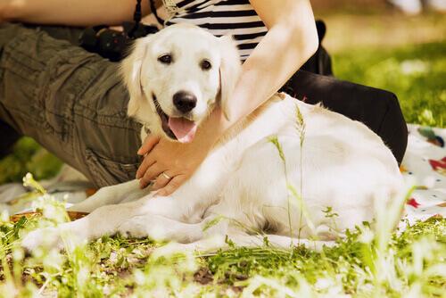 Cães trazem muita felicidade