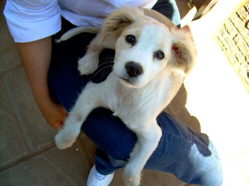 cão-pessoa1