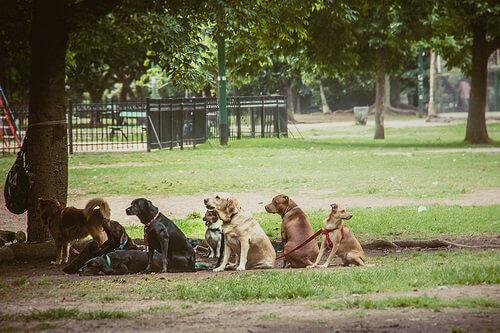 Cães em parque