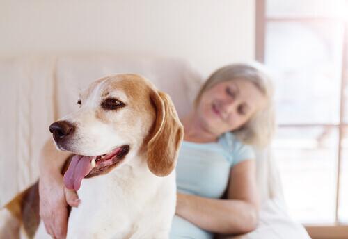 Cão com dona
