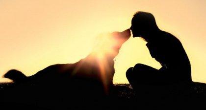 As emoções caninas