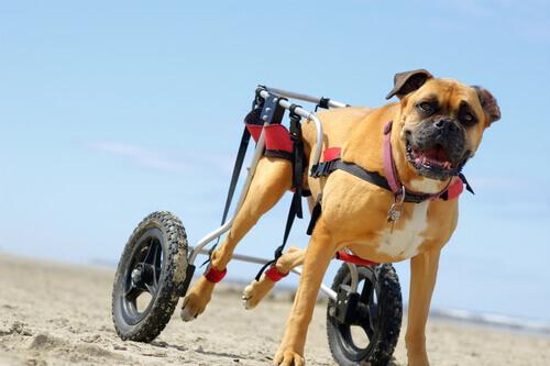 carrinho-para-cães