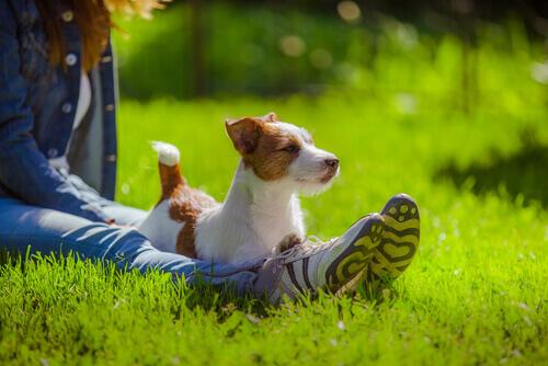 Cachorro sentado na grama com dona