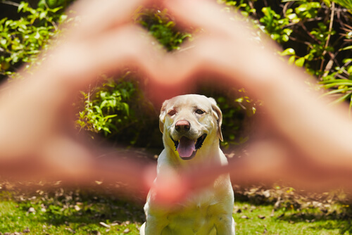 Cachorro em coração