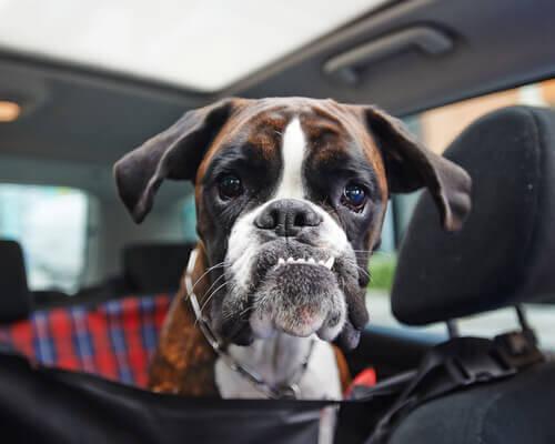 O hipotireodismo em cães