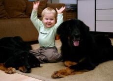 Amor pelos animais