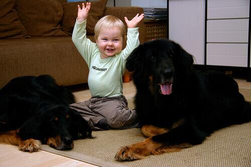 O amor pelos animais começa desde nossa infância