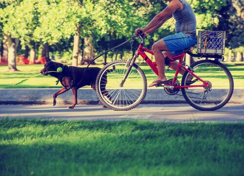Veja quais são os 10 erros mais comuns praticados por donos de cão