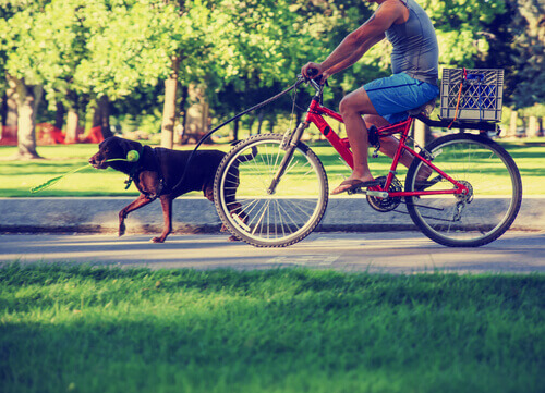 passear com cachorro