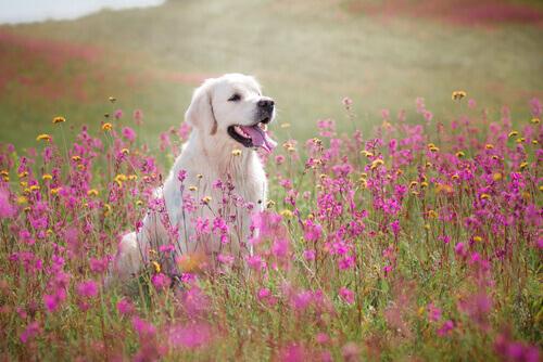 Um cão só nos faz sofrer quando morre