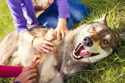 Cão recebendo carinho