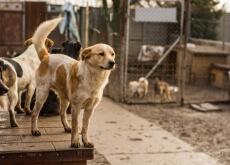 Abrigo para cães de moradores de rua