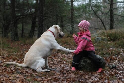 Um cachorro não é um brinquedo