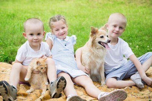 Gato, cachorro e crianças