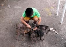 Um menino filipino cria um abrigo de animais