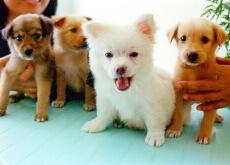 Como apresentar novas pessoas ao seu cão