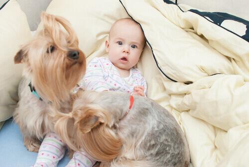 Cães melhoram a saúde dos bebês