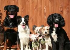 Cães de rua