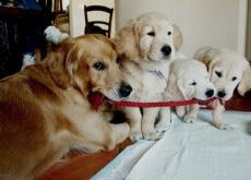 O poder curativo dos cães