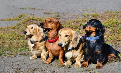 Cães na rua