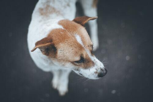 Cão desnutrido foi resgatado enquanto sua dona estava viajando