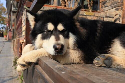Por que os cães têm tanto sono