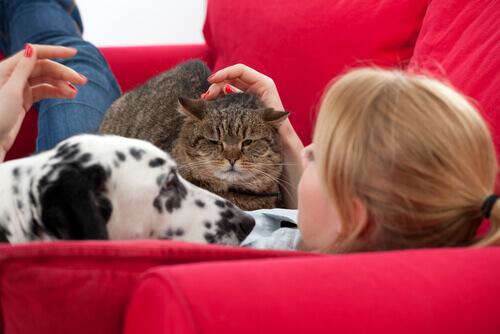 Gato e cachorro no sofá com dona